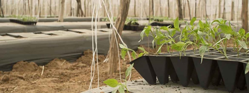 ¿Cuáles son las caracteristicas de la permacultura y cómo funciona?