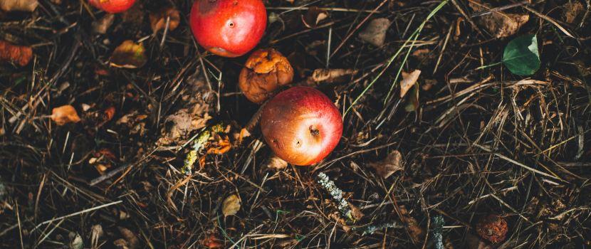 abono compostado