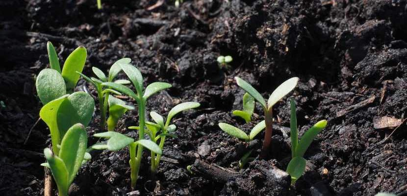 cómo hacer abono orgánico rápido