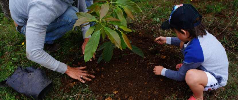 abono para plantas