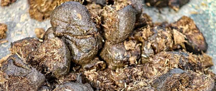 abono orgánico líquido biol