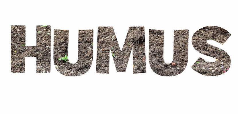 abono orgánico con humus