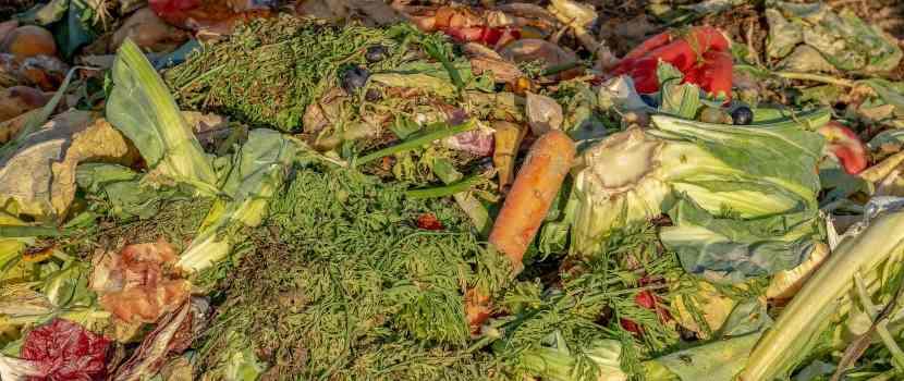 desperdicios orgánicos para compost