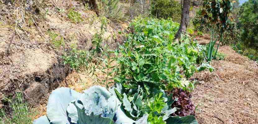 permacultura agrícola