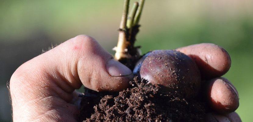cómo se aplica la agricultura orgánica