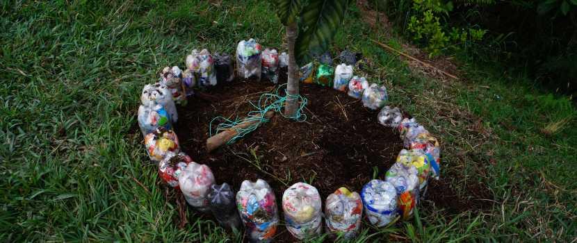 cerco de árbol en botellas